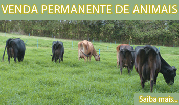 Venda Permanente de Animais